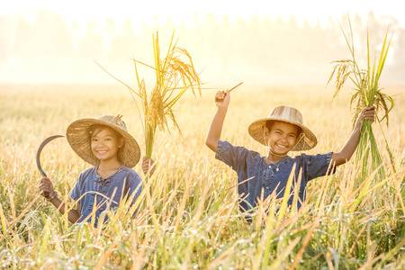 65741249-asian-children-farmer-on-yellow-rice-field-in-the-morning.jpg