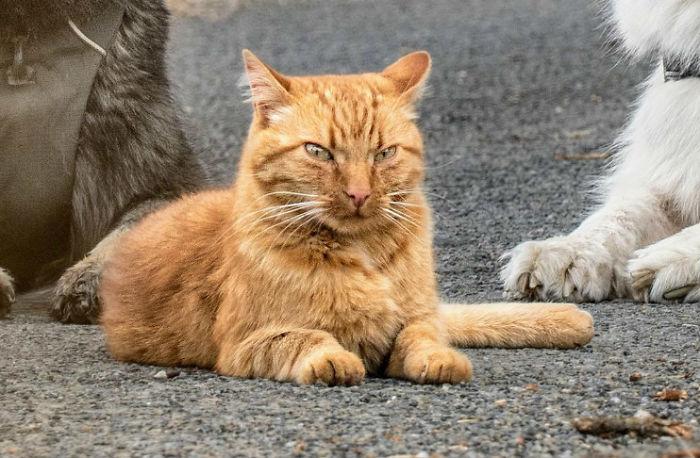 Được cứu sống sau khi bị tai nạn, chú mèo hòa nhập cùng đàn chó lớn và quên mất luôn mình là mèo gây sốt mạng xã hội - Ảnh 5.