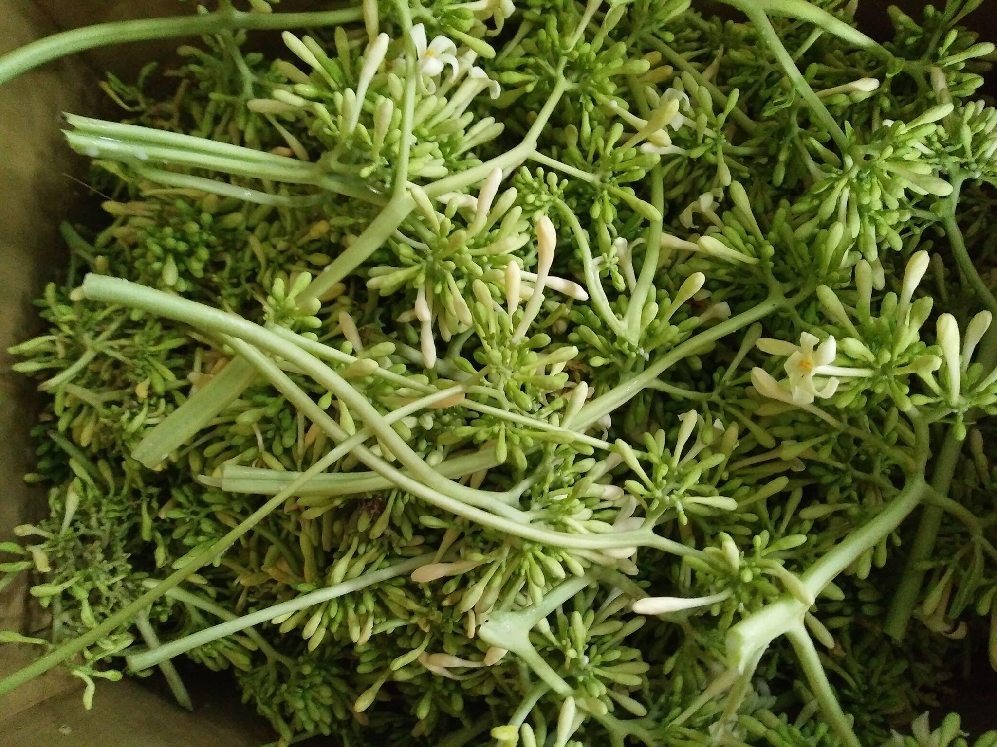 Hoa đu đủ đực: Loại hoa trước đây vứt đi nay được gom bán tiền triệu/kg - Ảnh 2.