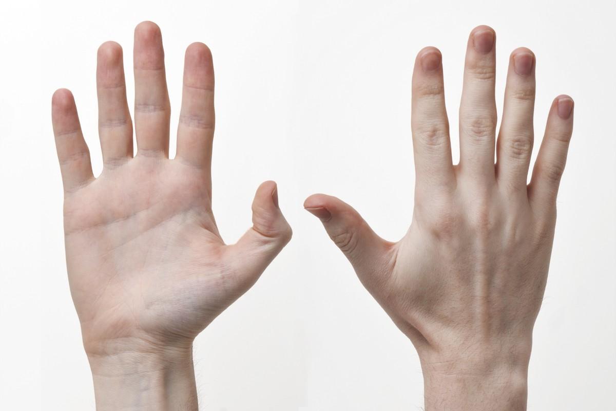 12 bộ phận trên cơ thể có thể hé lộ trí thông minh của bạn - ảnh 8.