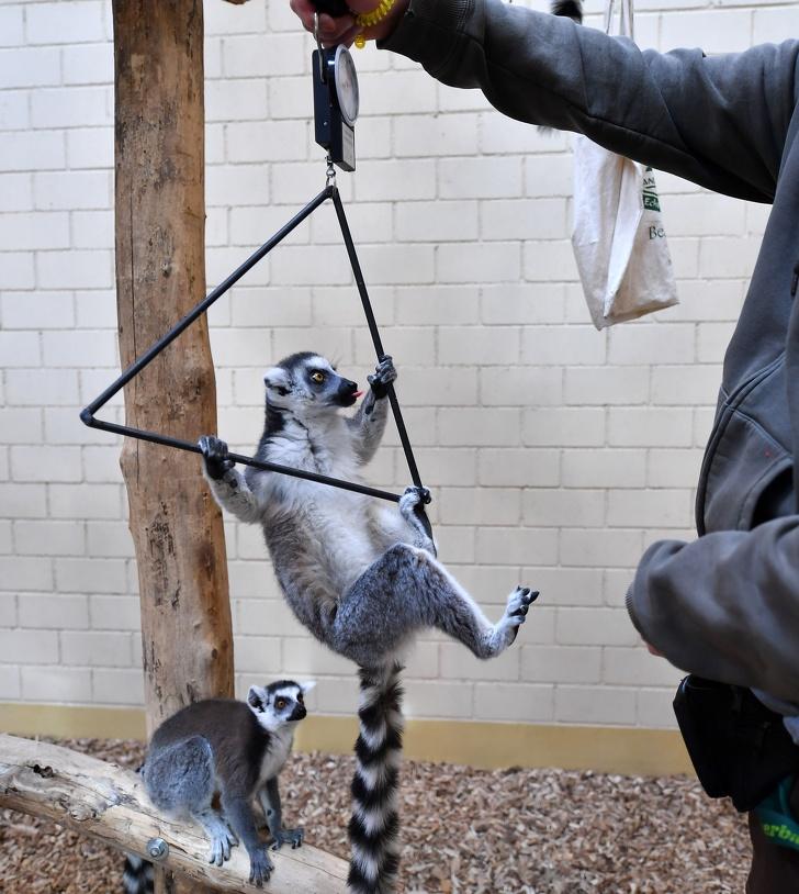 """Nhân viên chăm sóc động vật """"cân"""" thú cưng như thế nào? Loạt ảnh đáng yêu hết sức dưới đây sẽ mở mang tầm mắt của chị em! - Ảnh 9."""