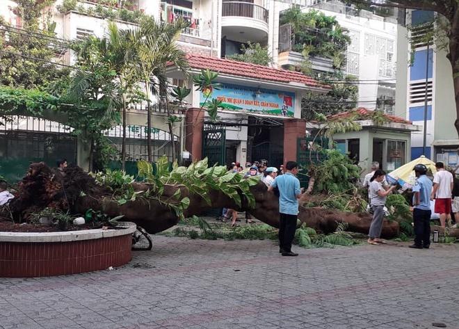 Bộ trưởng GD&ĐT yêu cầu rà soát toàn bộ cây xanh trường học sau vụ học sinh ở TP.HCM bị cây đè - Ảnh 1.