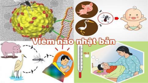 Mùa hè, bệnh viêm não Nhật Bản tăng cao, cha mẹ không làm việc này thì con có nguy cơ mắc bệnh và biến chứng nặng cao hơn - Ảnh 1.
