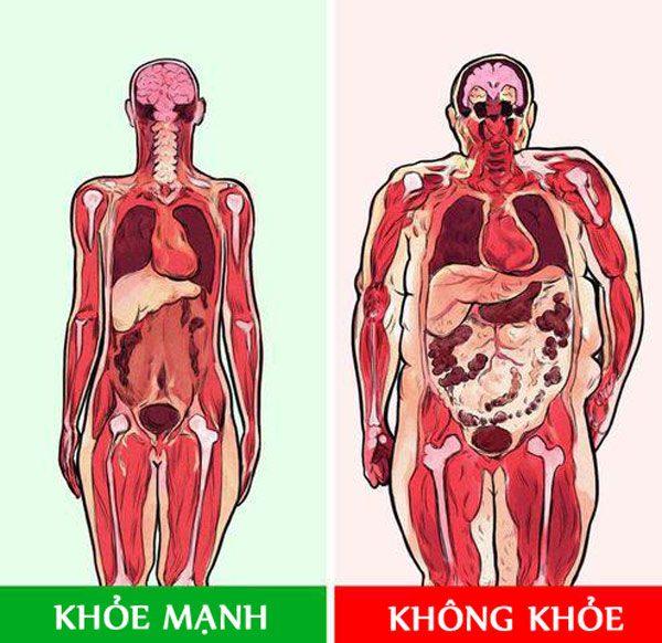 """5 lý do tại sao có mỡ ở vùng này trên cơ thể khiến cho sức khỏe """"lâm nguy"""" nhất - Ảnh 2."""