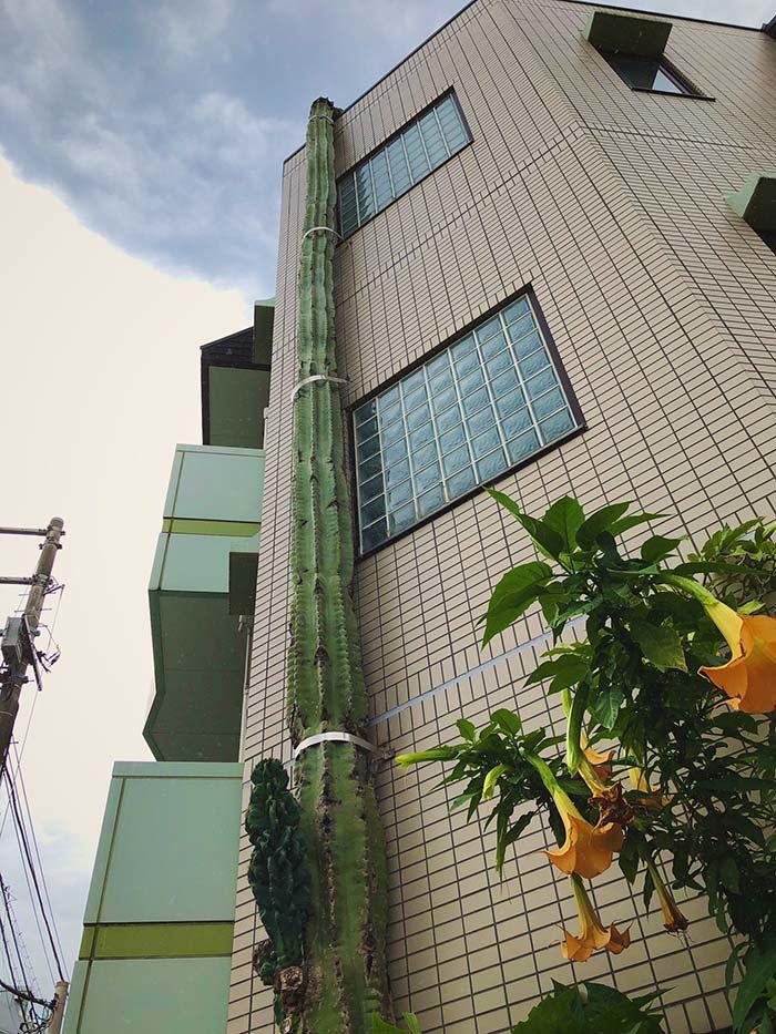 Choáng váng với cây xương rồng khổng lồ, cao hơn cả tòa nhà 3 tầng - Ảnh 3.
