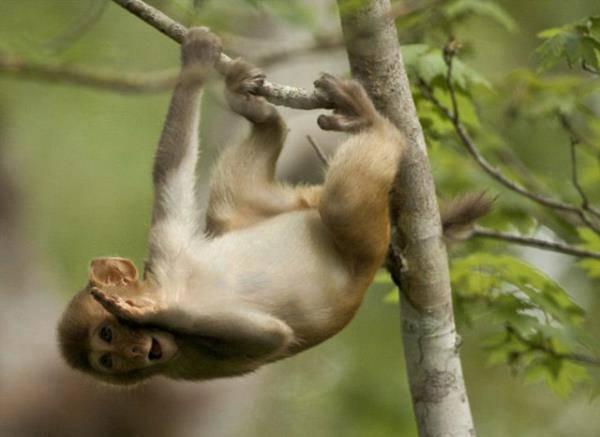 Người đàn ông 30 năm đi bộ bằng cả 4 chi, leo trèo như khỉ vì lý do đặc biệt - Ảnh 2.
