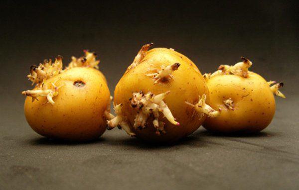 6 loại rau củ chứa đầy độc tố có thể gây ung thư, thiệt mạng nhưng nhiều người vẫn ăn - Ảnh 2.