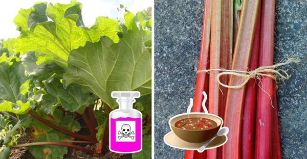 6 loại rau củ chứa đầy độc tố có thể gây ung thư, thiệt mạng nhưng nhiều người vẫn ăn - Ảnh 4.