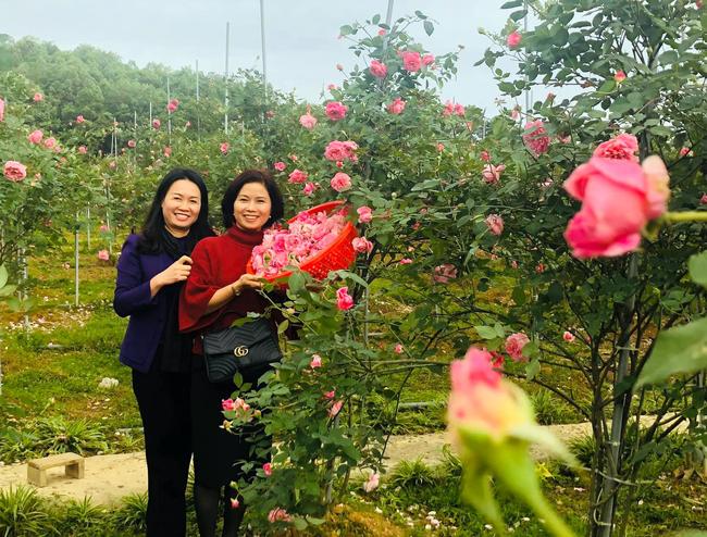 Gieo trồng ước mơ trong trang trại hoa hồng - Ảnh 1.