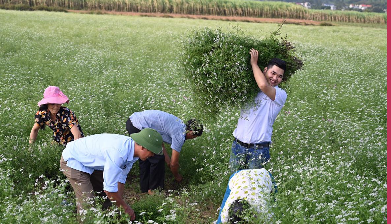 Quyết tâm thoát nghèo từ nông nghiệp, chàng sinh viên Bách khoa 7 lần khởi nghiệp thất bại nhận được cái kết có hậu  - Ảnh 3.