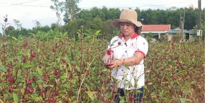 'Cô gái Atiso đỏ' giành giải nhất cuộc thi khởi nghiệp tỉnh Thừa Thiên Huế - Ảnh 1.