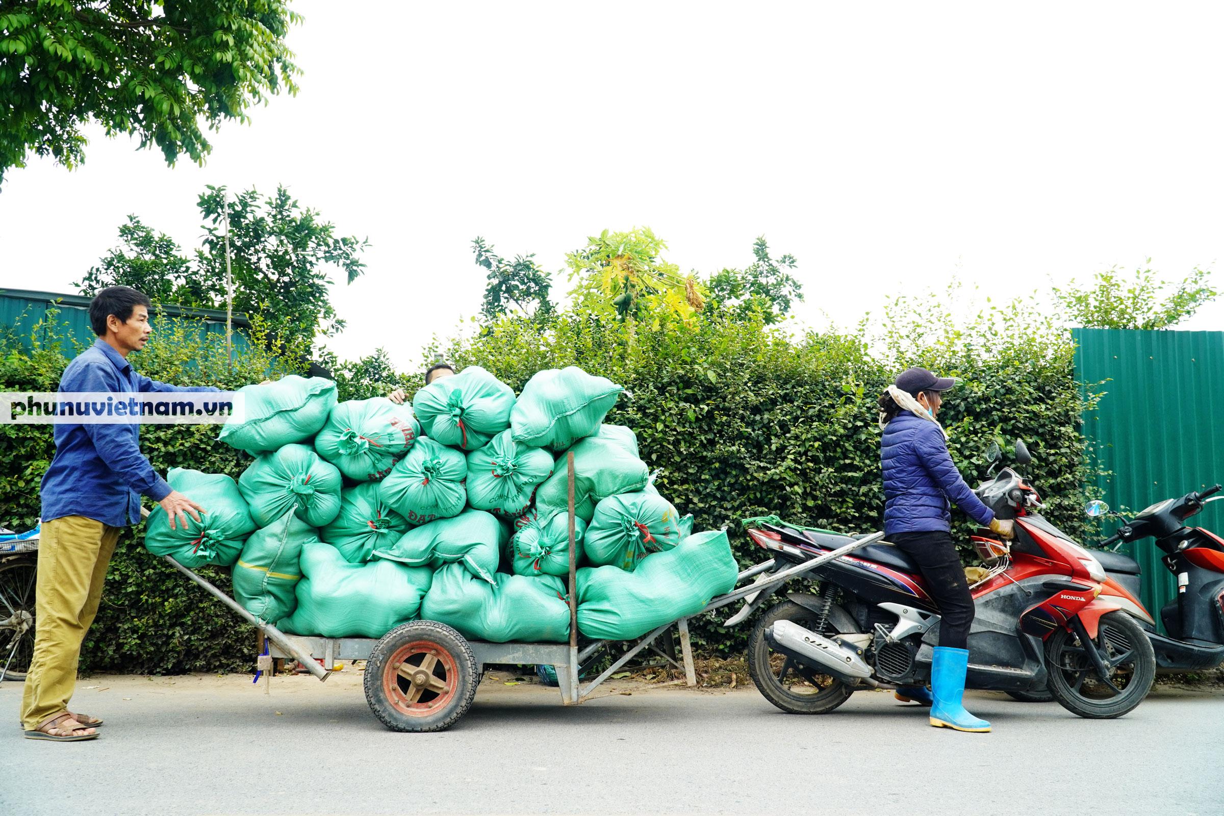 Vườn bưởi Diễn tuổi 30, chi chít cả trăm quả chào Xuân Tân Sửu - Ảnh 16.