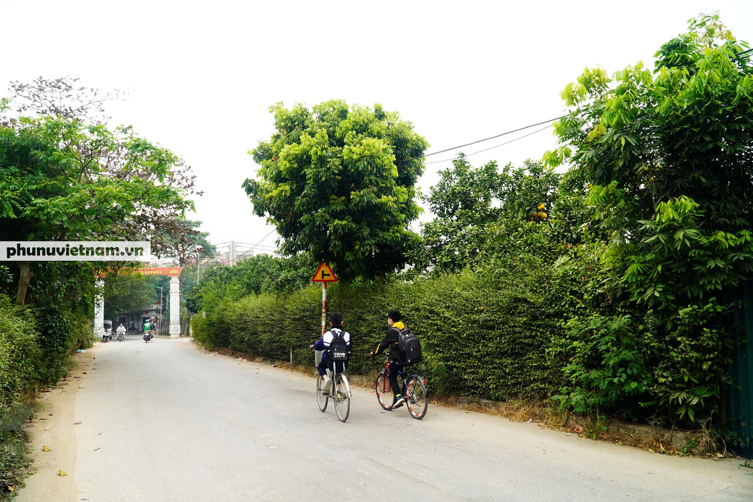 Vườn bưởi Diễn tuổi 30, chi chít cả trăm quả chào Xuân Tân Sửu - Ảnh 17.