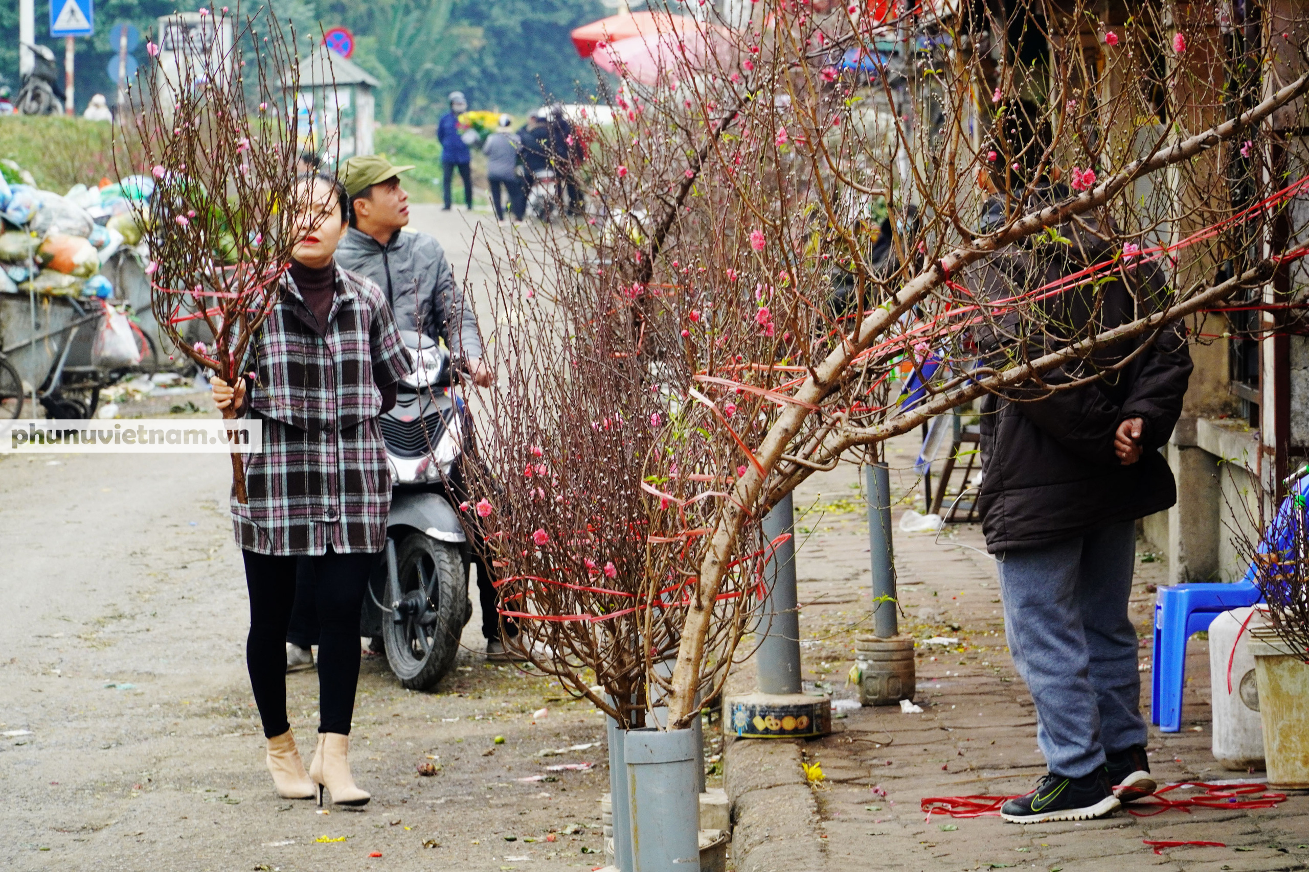 Đào Nhật Tân nở sớm hơn mọi năm, người trồng cầu mong giá rét kéo dài - Ảnh 2.