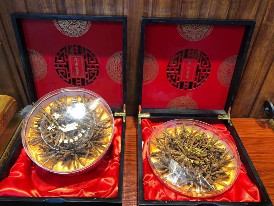 Cận Tết, nhà giàu Việt bỏ vài chục triệu đôn đáo tìm mua đông trùng hạ thảo làm quà biếu thượng hạng  - Ảnh 3.