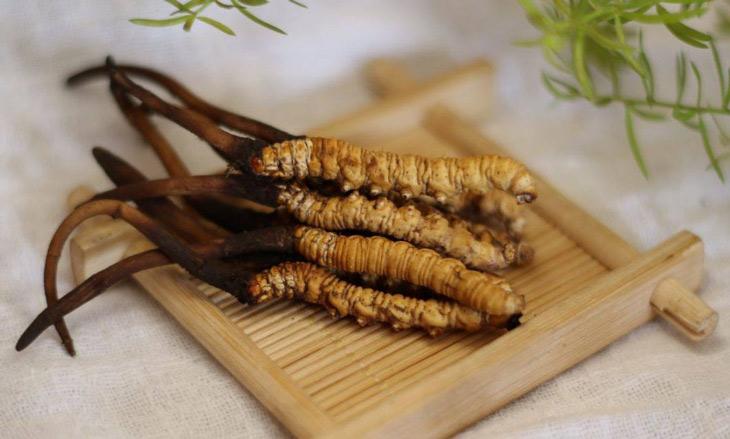 Cận Tết, nhà giàu Việt bỏ vài chục triệu đôn đáo tìm mua đông trùng hạ thảo làm quà biếu thượng hạng  - Ảnh 7.