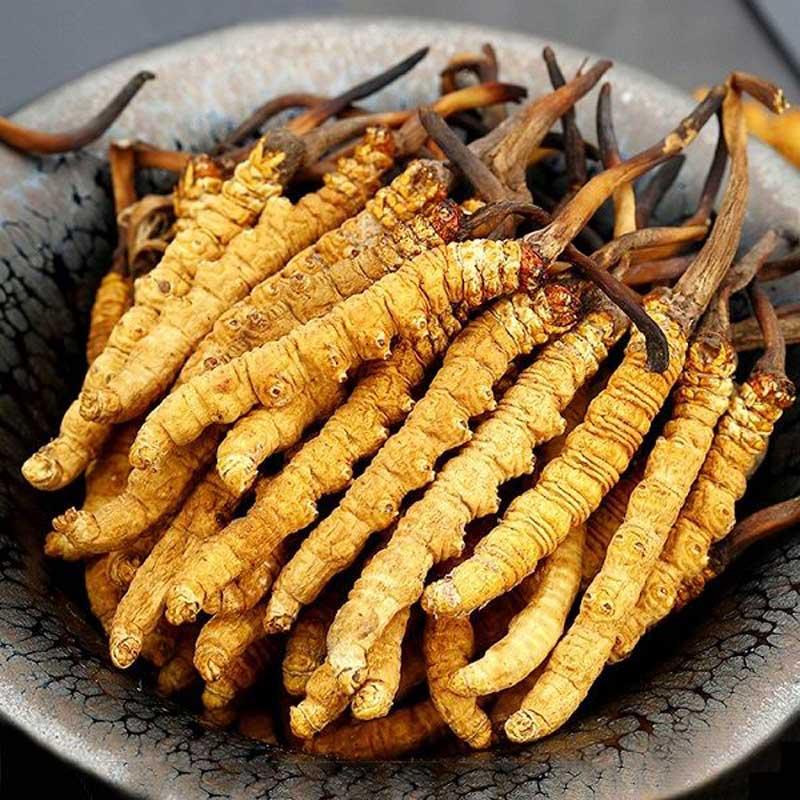 Cận Tết, nhà giàu Việt bỏ vài chục triệu đôn đáo tìm mua đông trùng hạ thảo làm quà biếu thượng hạng  - Ảnh 2.
