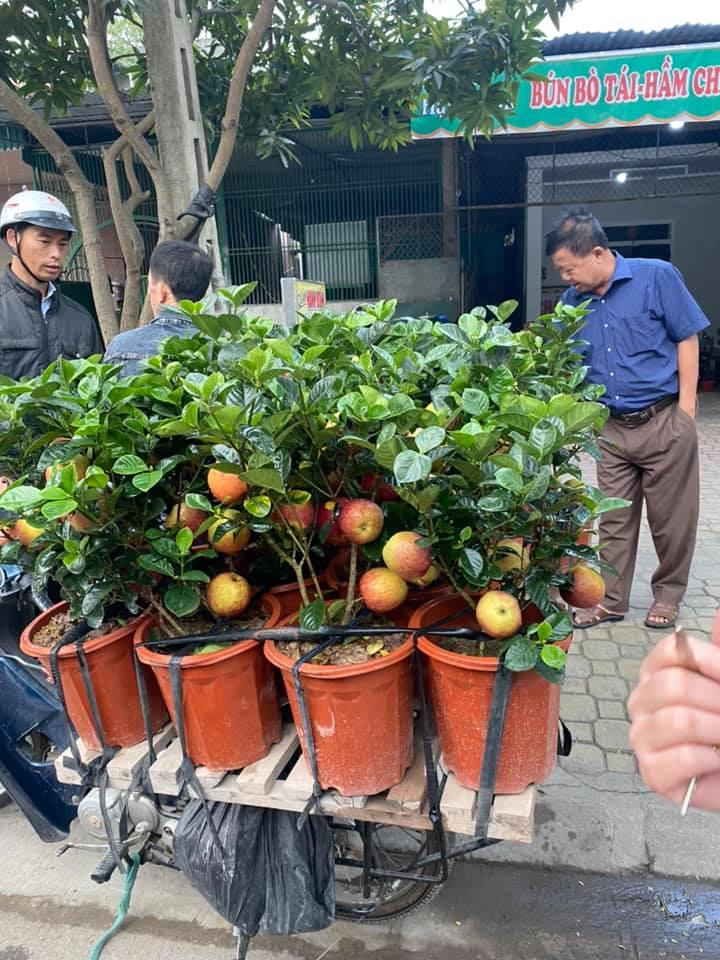 Cận Tết, xuất hiện cây táo giả hệt táo thật giá 200-300 ngàn/cây vẫn được nhiều người qua đường mua về chơi Tết vì lạ mắt - Ảnh 2.