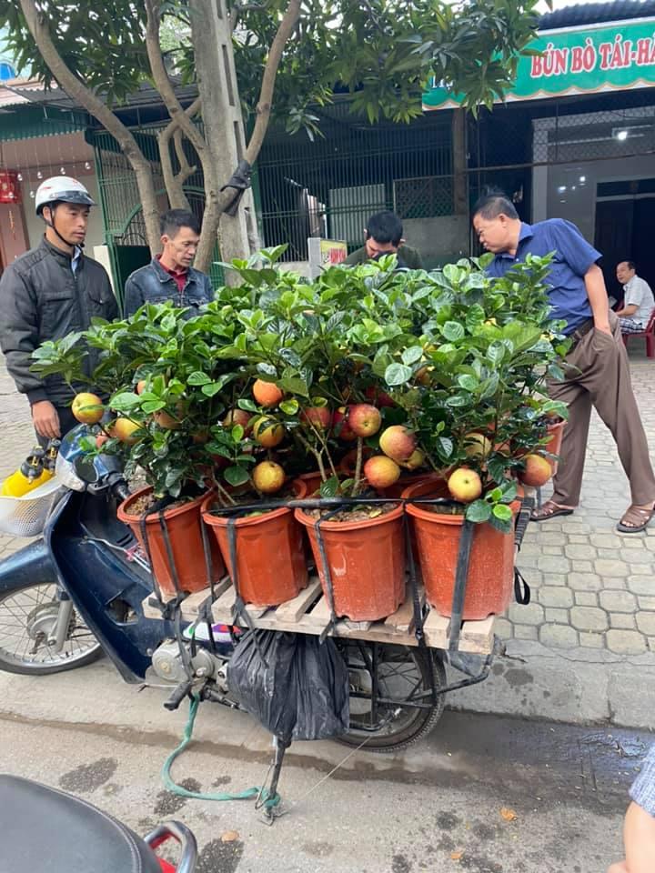 Cận Tết, xuất hiện cây táo giả hệt táo thật giá 200-300 ngàn/cây vẫn được nhiều người qua đường mua về chơi Tết vì lạ mắt - Ảnh 1.