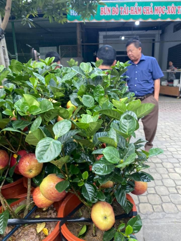 Cận Tết, xuất hiện cây táo giả hệt táo thật giá 200-300 ngàn/cây vẫn được nhiều người qua đường mua về chơi Tết vì lạ mắt - Ảnh 3.