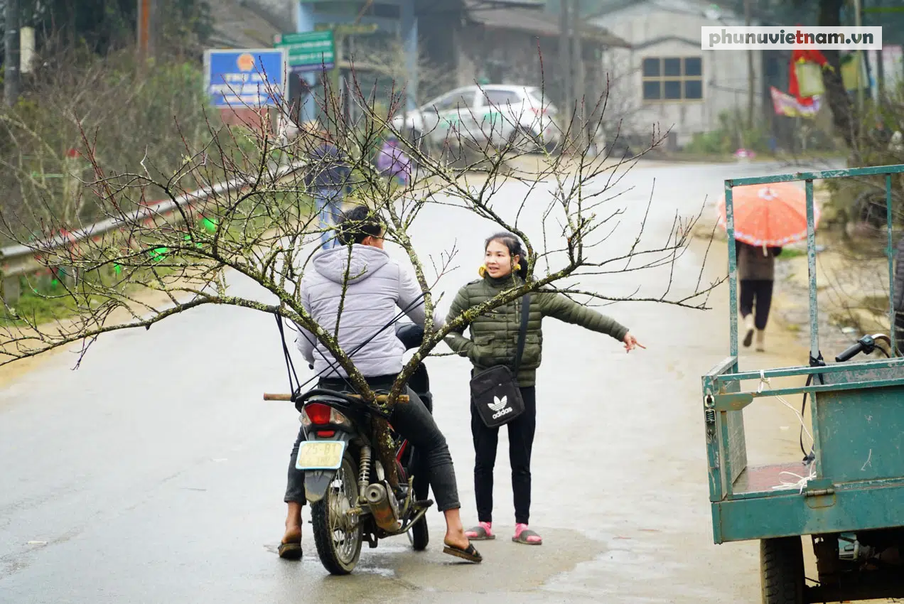 """""""Lào Cai không có đào rừng, việc mua bán diễn ra bình thường"""" - Ảnh 3."""