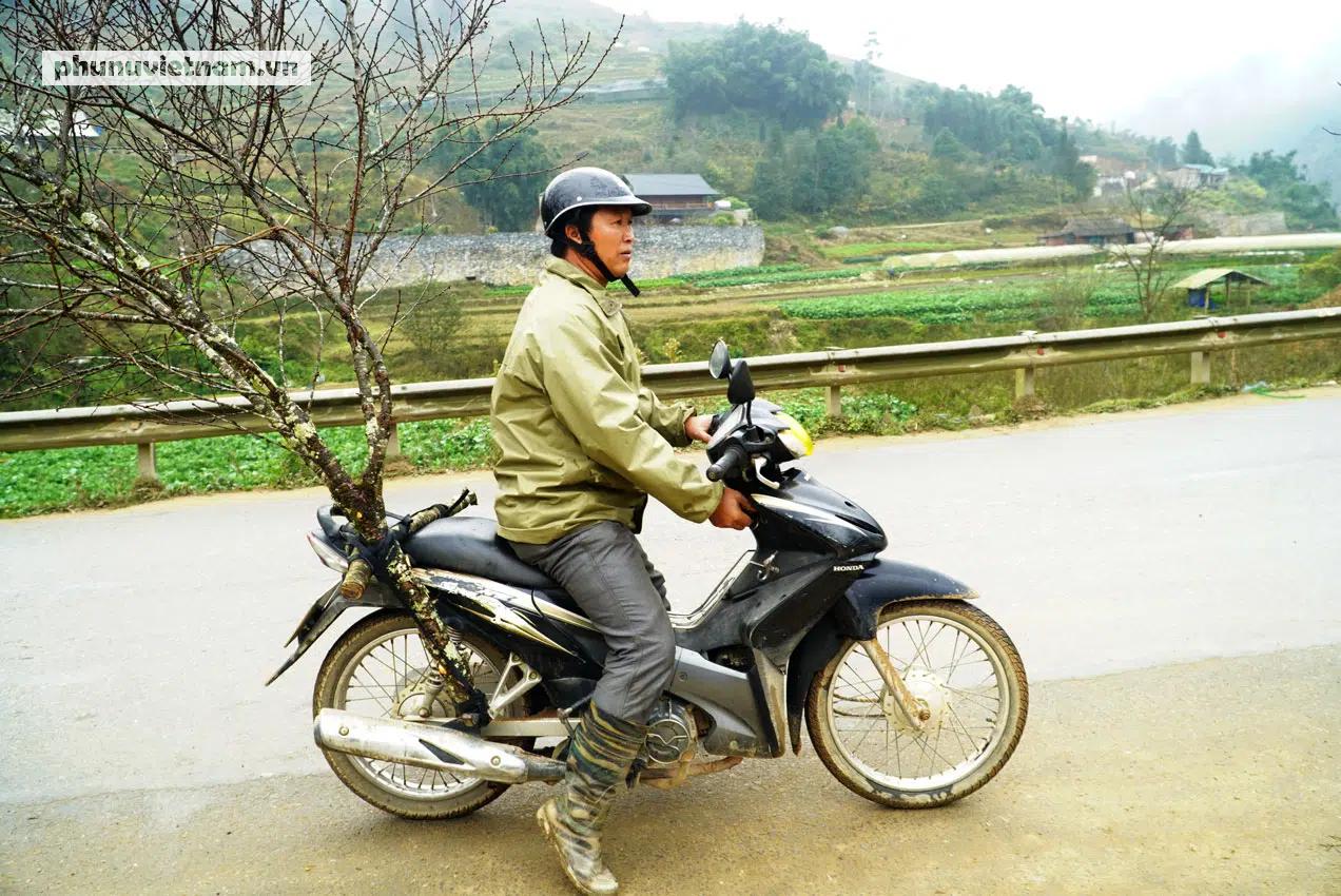 """""""Lào Cai không có đào rừng, việc mua bán diễn ra bình thường"""" - Ảnh 11."""
