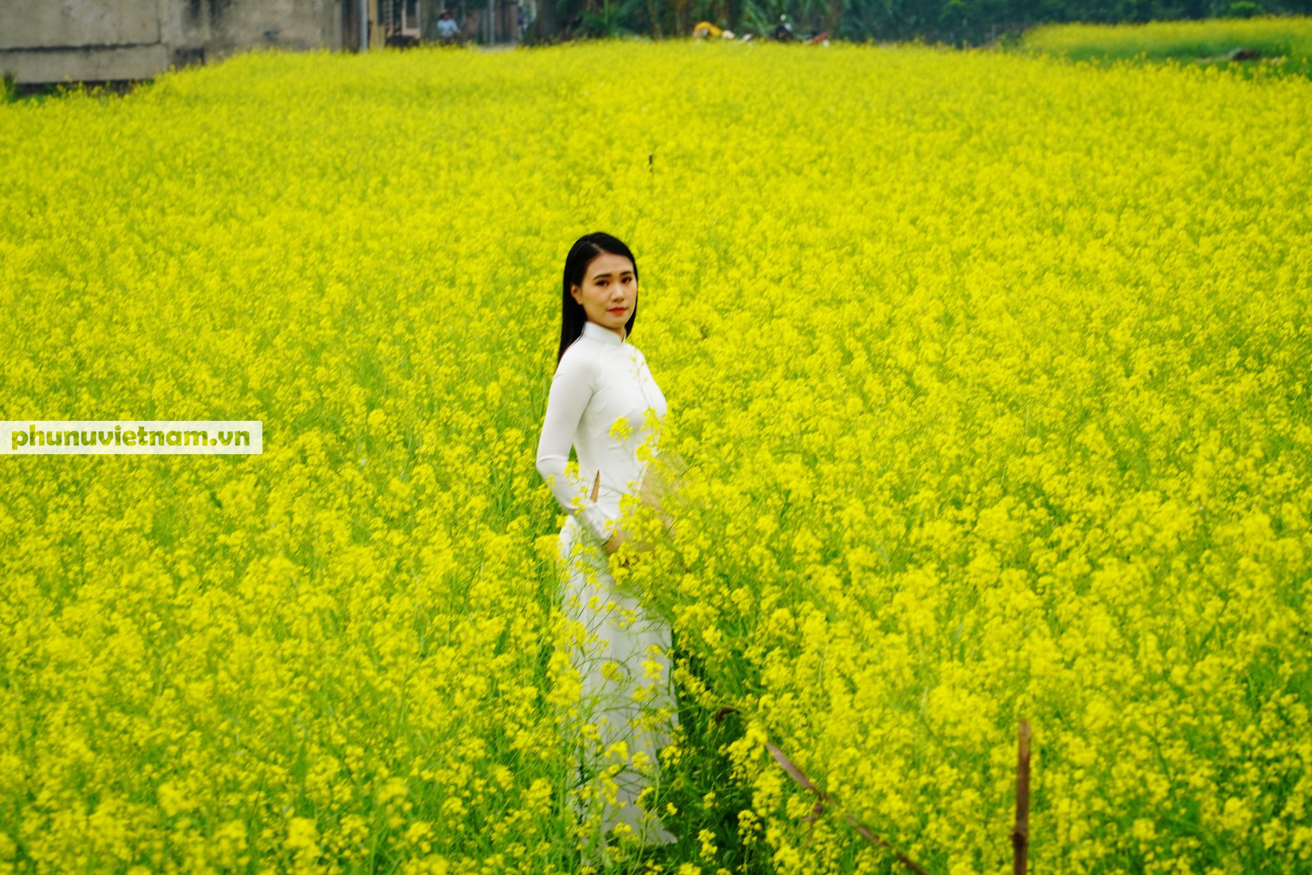 Thiếu nữ áo trắng đẹp hút lòng người trên cánh đồng hoa cải vàng ở Chi Đông - Ảnh 8.