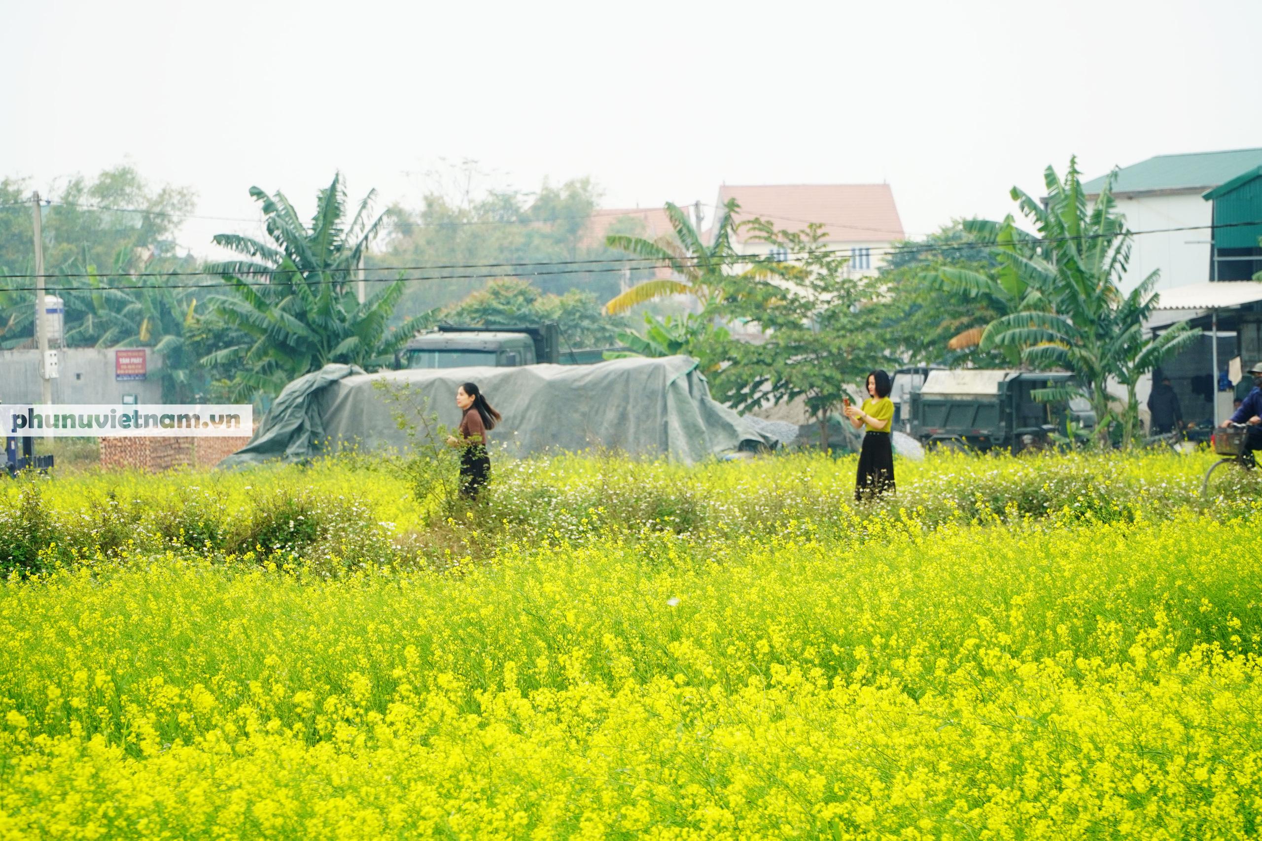 Thiếu nữ áo trắng đẹp hút lòng người trên cánh đồng hoa cải vàng ở Chi Đông - Ảnh 9.