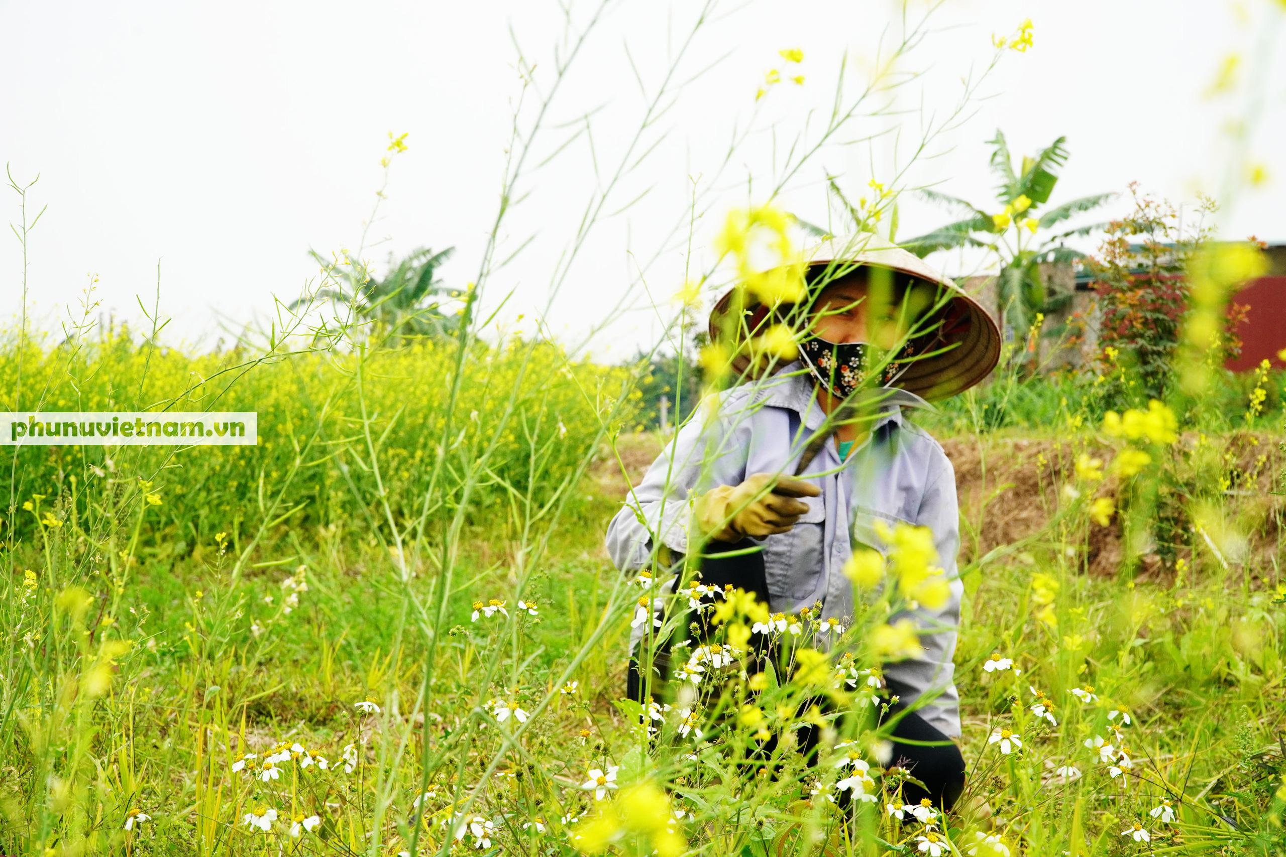 Thiếu nữ áo trắng đẹp hút lòng người trên cánh đồng hoa cải vàng ở Chi Đông - Ảnh 10.