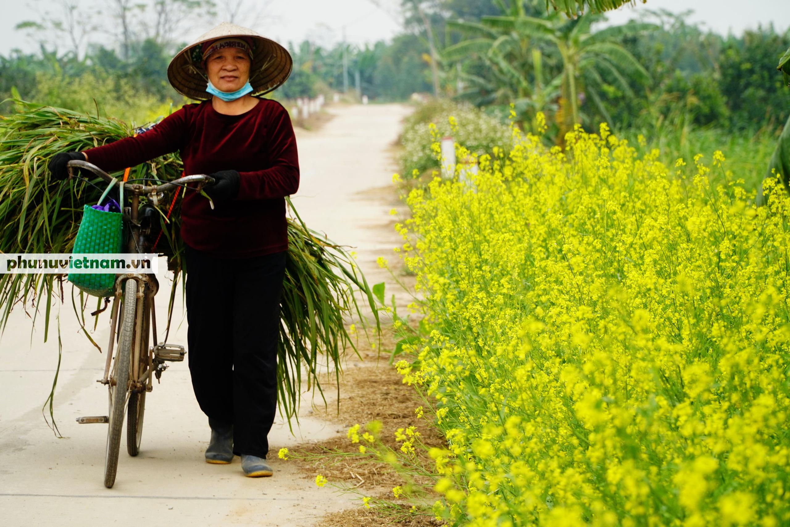 Thiếu nữ áo trắng đẹp hút lòng người trên cánh đồng hoa cải vàng ở Chi Đông - Ảnh 11.