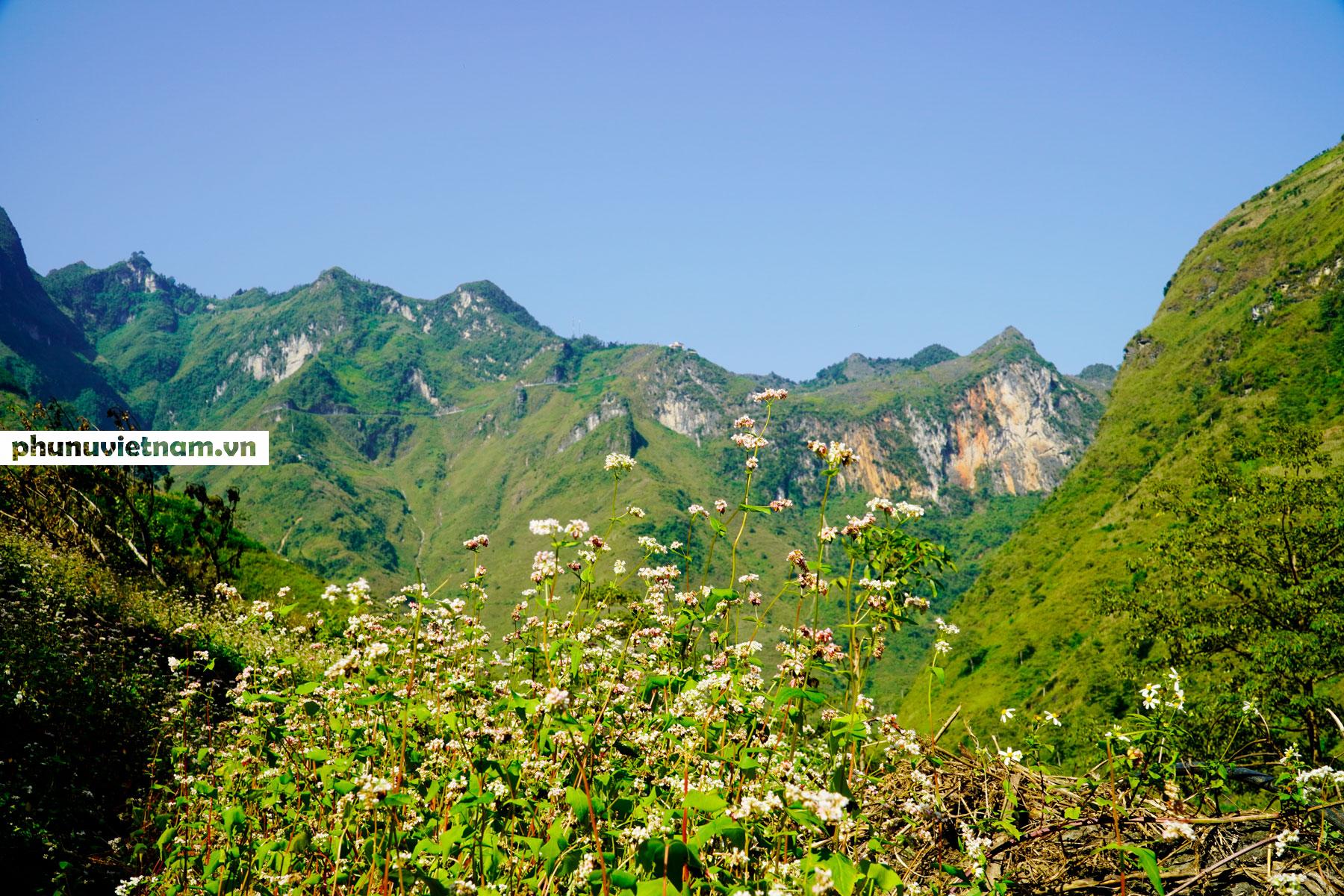 Mùa hoa tam giác mạch đong đầy nỗi nhớ trên Cao nguyên đá Hà Giang - Ảnh 3.