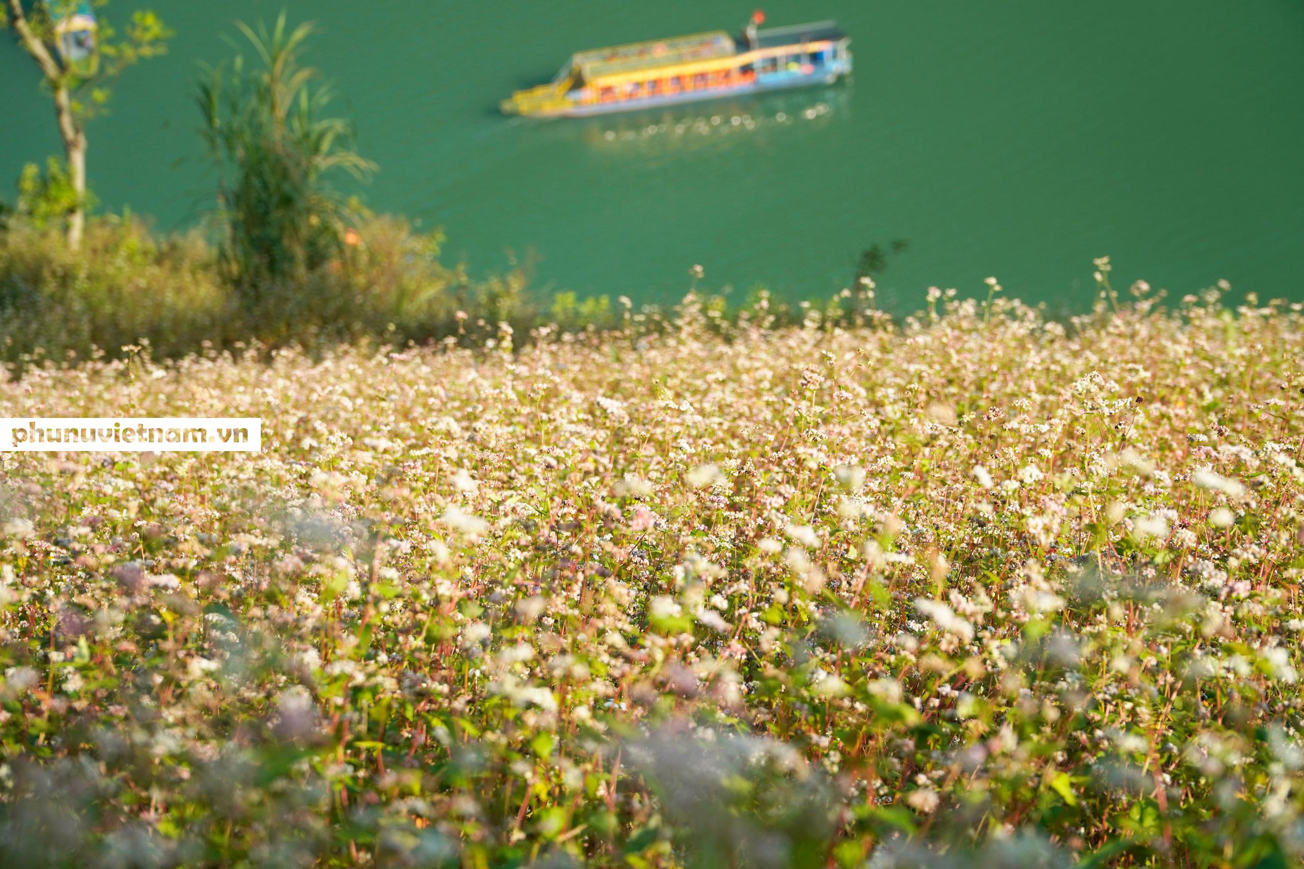 Mùa hoa tam giác mạch đong đầy nỗi nhớ trên Cao nguyên đá Hà Giang - Ảnh 4.