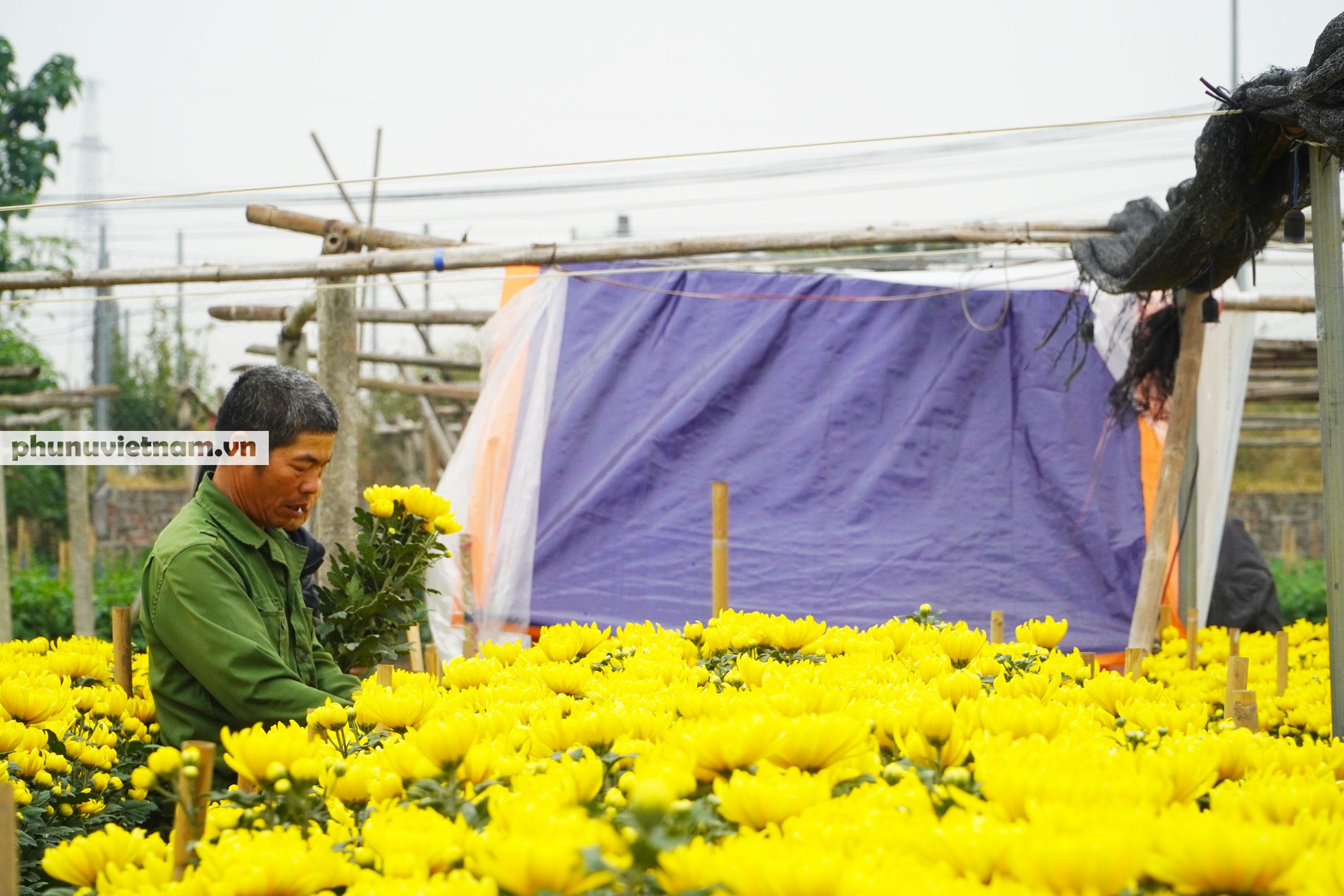 Người trồng hoa Tây Tựu dựng chòi trông hoa, ngủ qua đêm giữa trời rét buốt - Ảnh 2.