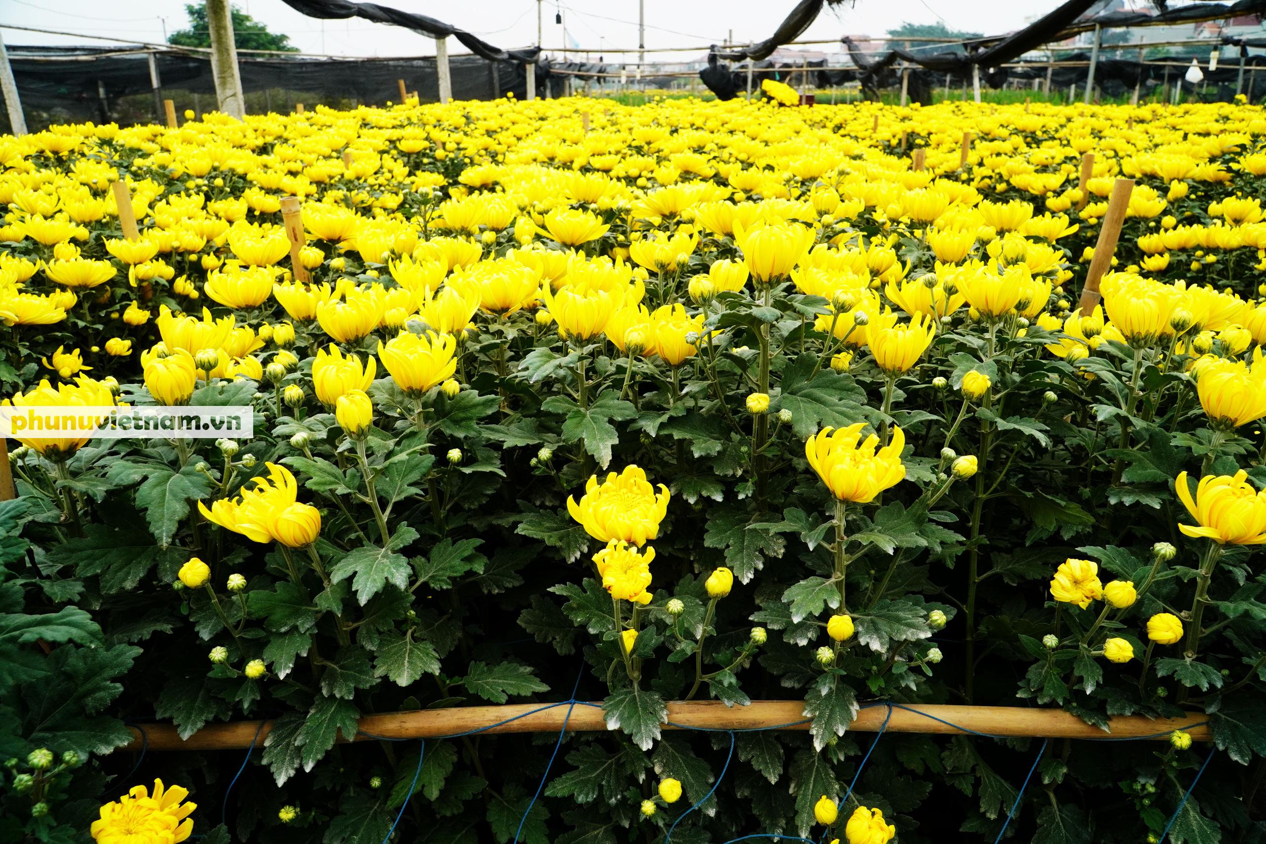 Người trồng hoa Tây Tựu dựng chòi trông hoa, ngủ qua đêm giữa trời rét buốt - Ảnh 7.