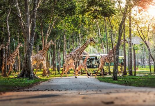 """Một ngày vào vai """"nhà động vật học"""" giữa """"thiên đường hoang dã"""" Vinpearl Safari - Ảnh 7."""
