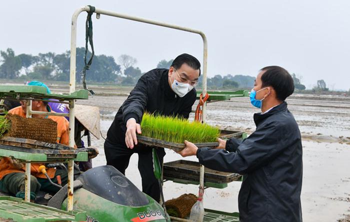 Bí thư và Chủ tịch Hà Nội cùng ra đồng cấy lúa - Ảnh 2.