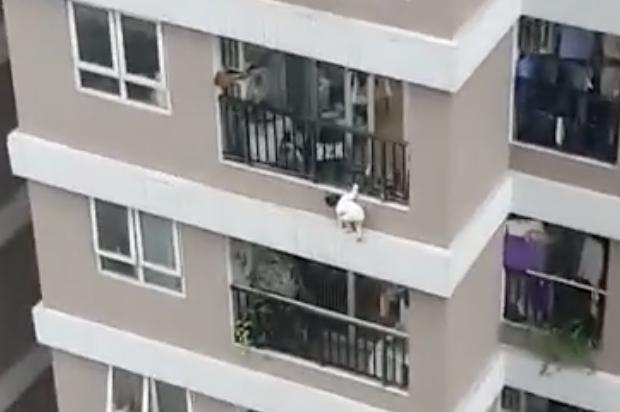 Bé gái 3 tuổi rơi từ tầng 12 chung cư: Thời gian này bố mẹ đang tiễn khách - Ảnh 1.