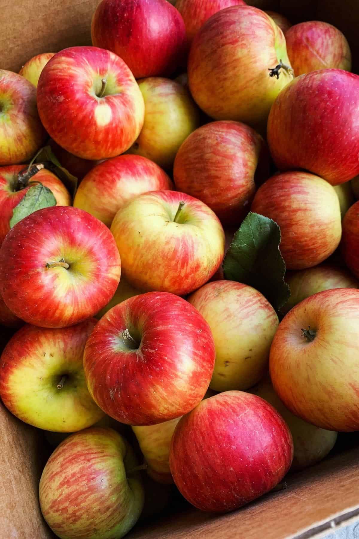 Chuyên gia khuyên chị em ăn 7 loại quả này vào buổi sáng để giảm cân, giữ eo thon bền vững - Ảnh 1.