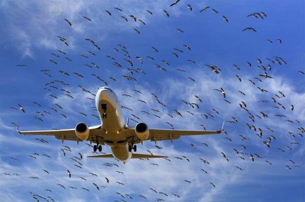 Hoãn bay 4 tiếng vì xác chim kẹt ở càng máy bay - Ảnh 1.