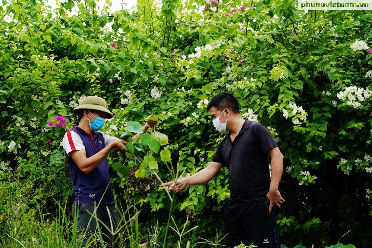 Chiêm ngưỡng những loại hoa sen độc lạ vào mùa tại Hà Nội - Ảnh 1.