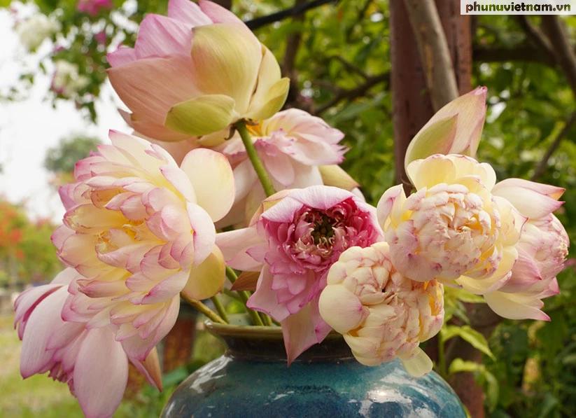 Chiêm ngưỡng những loại hoa sen độc lạ vào mùa tại Hà Nội - Ảnh 2.