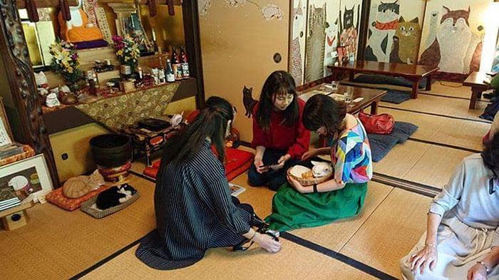 Nyan Nyan Ji, chùa Mèo nổi tiếng có một không hai ở Nhật Bản - Ảnh 9.