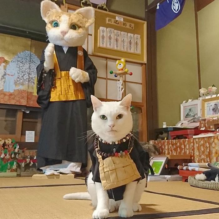Nyan Nyan Ji, chùa Mèo nổi tiếng có một không hai ở Nhật Bản - Ảnh 1.