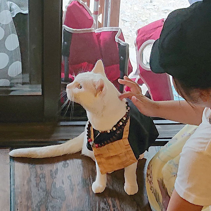 Nyan Nyan Ji, chùa Mèo nổi tiếng có một không hai ở Nhật Bản - Ảnh 6.