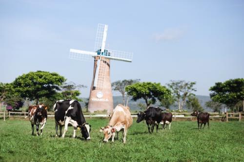 """Sữa tươi organic của Vinamilk dành được cảm tình của người dân """"Đảo quốc sư tử"""" - Ảnh 5."""