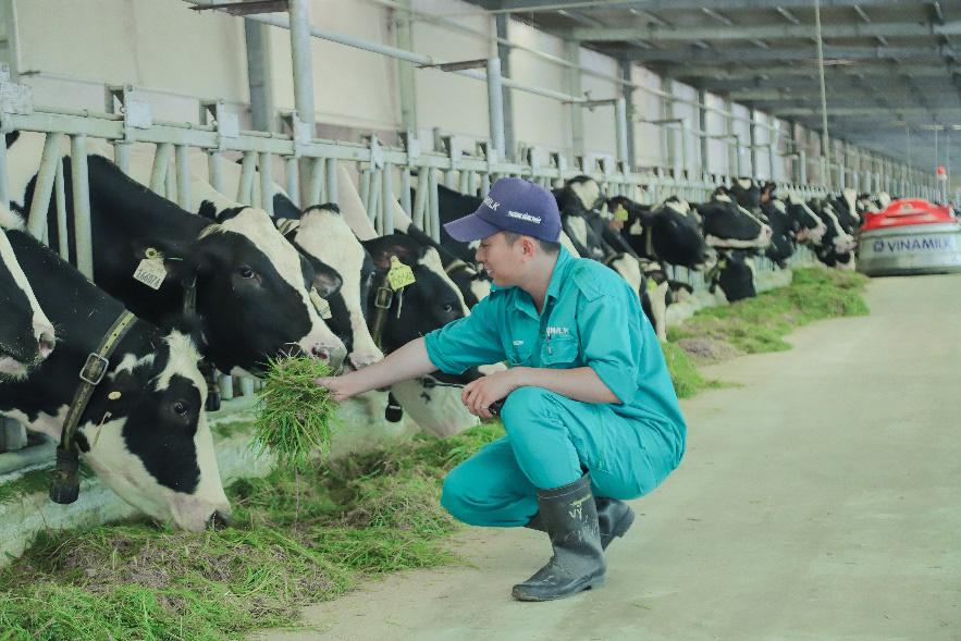 """Tết tại """"resort"""" bò sữa Vinamilk có gì đặc biệt? - Ảnh 1."""