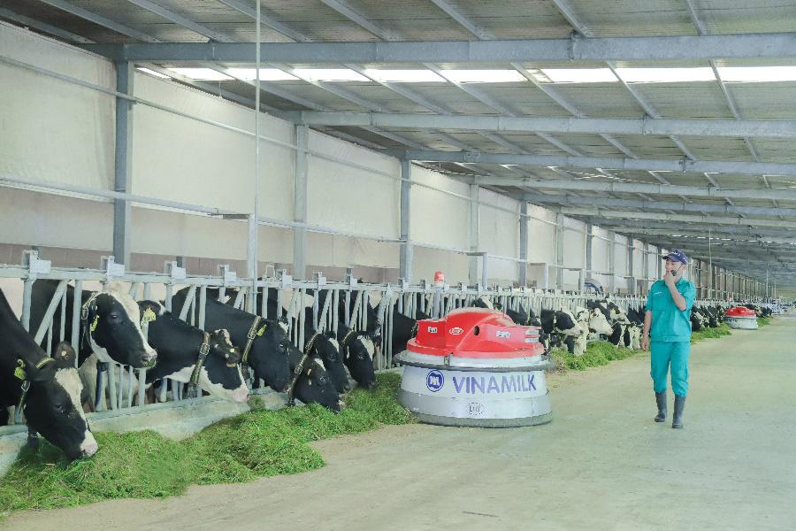 """Tết tại """"resort"""" bò sữa Vinamilk có gì đặc biệt? - Ảnh 2."""