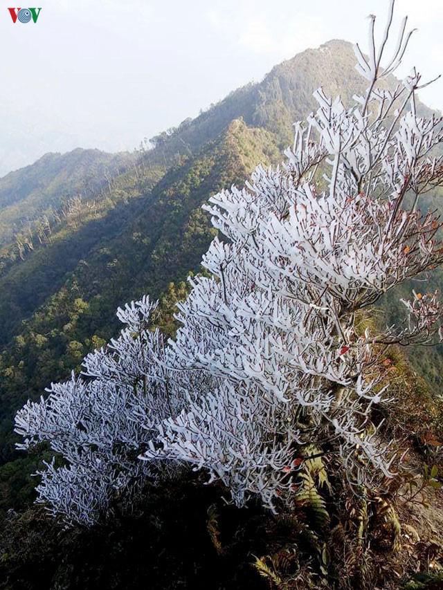 Xuất hiện băng tuyết ở huyện Mù Cang Chải và Trạm Tấu - Ảnh 1.
