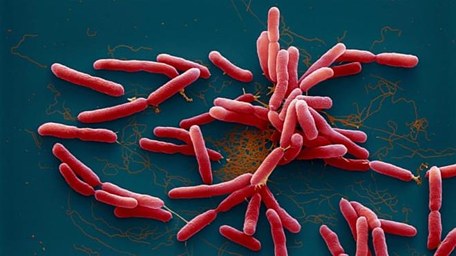 Có khuẩn whitmore tại nhà có 3 anh em tử vong - Ảnh 1.