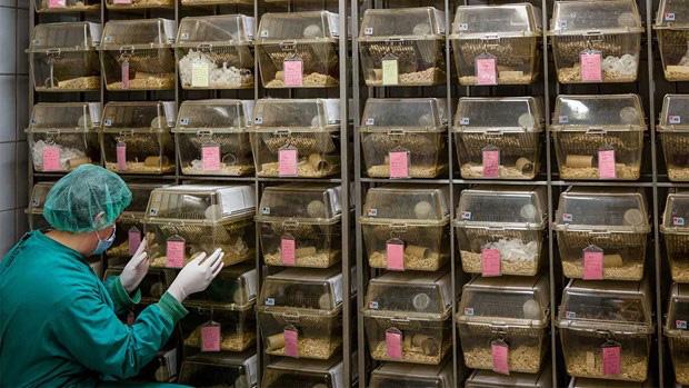 Trung Quốc bắt đầu thử nghiệm trên chuột vaccine ngừa virus corona chủng mới - Ảnh 1.